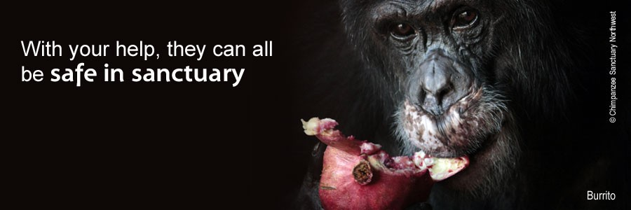 Chimpanzees deserve release from laboratories and restitution in sanctuary.