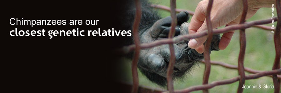 Like us, chimpanzees care about family, make choices, laugh, cry, and suffer when their freedom is taken.