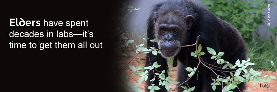 The Great Ape Protection and Cost Savings Act will end the use of chimpanzees in research.