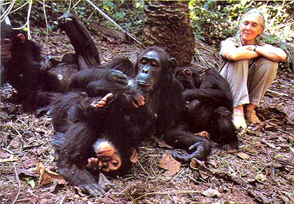 Jane Goodall and chimpanzee friends in forest